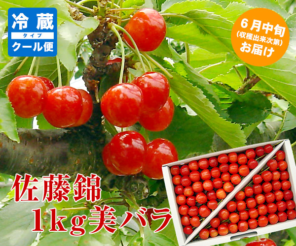 佐藤錦1キロ美バラ